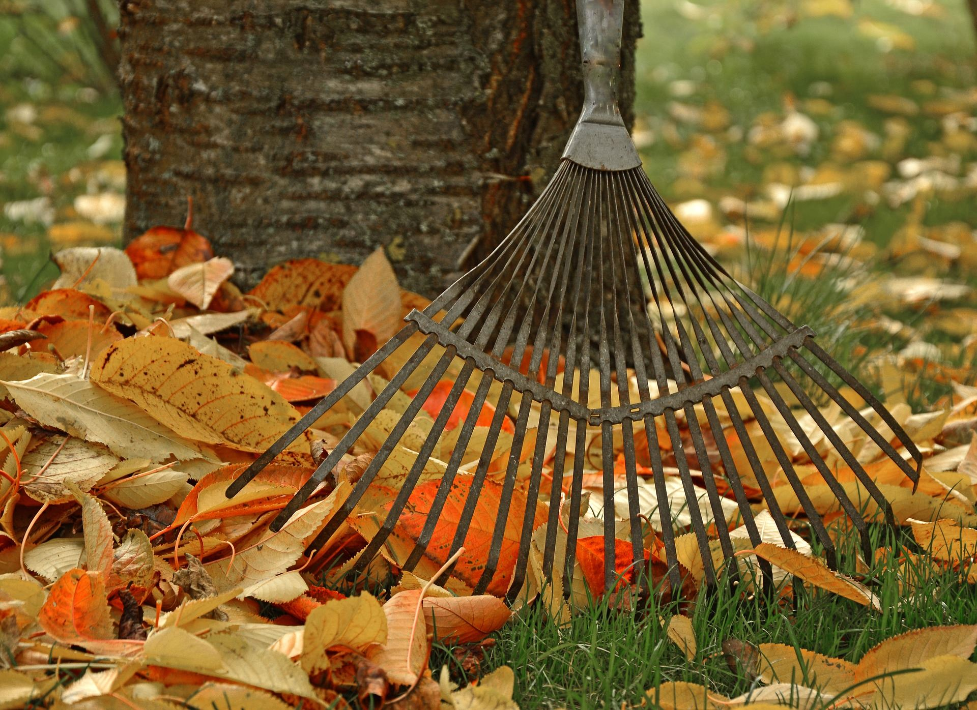 Picture of rake and leaves